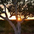 the tree at sunset by mickels