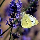 The Lavender Tastes Good by saxonfenken