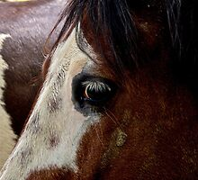 White lashes by mypic