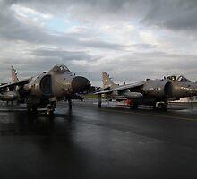 Harrier Pair by Andy Jordan