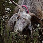 Kayaköy Resident Goat by DExPIX