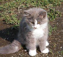 Barn Kitten 2 by WeeZie