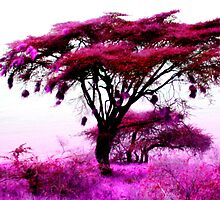 Pink Plains of Tanzania by Crystal Penick