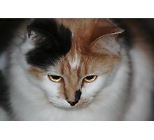 Buffy with Beautiful Eyes Photographic Print