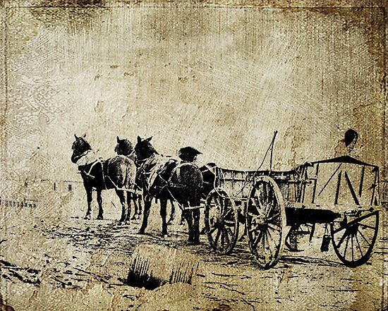 Four Mules by garts