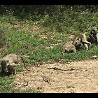Infant Baboons Playing by korinna999