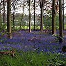 The Blue Forest by saxonfenken