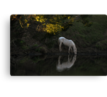 There Was a White Horse ... Canvas Print