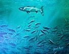 Hovering Barracuda by jyruff