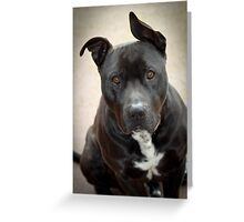 Are you sure... someone dug up the backyard... Who? Greeting Card