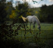it has become apparent i am drawn to horses. by christopher kontoes