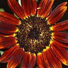 Copper Sunflower by Eileen Brymer