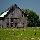 Rough Barn by Sheryl Gerhard