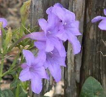 Blooming Petunias by Navigator