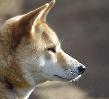 Dingo Profile by Linda Fury