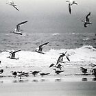 Scrambling Sea Birds by Jim Haley