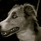 Lurcher by Lou Wilson
