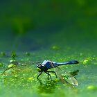 Pond Scum Skimmer by Peyton Duncan