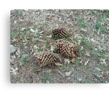 The Coulter Pine Cones Canvas Print