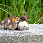 """Can You Keep a Secret...I Think You're Just Ducky""! by Carol Clifford"