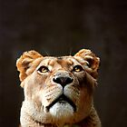 Thoughtful Lioness by Jen Martin