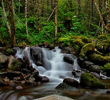 Canyon Creek Rush by Charles & Patricia   Harkins ~ Picture Oregon