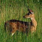 The Fawn by swaby