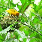 Yellow Bird Building Nest  by mhm710