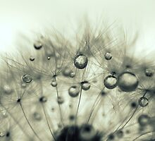 After the rain, before the sun by Deborah Durrant