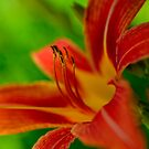 Red with Yellow Stripes by Christopher Gaines
