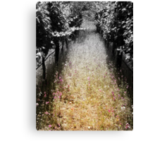 Path To Pinot Canvas Print
