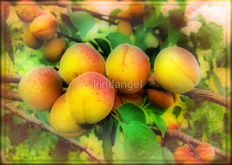 In the apricots kingdom by kindangel