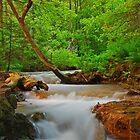 Deadhorse Creek by Bree Waltman