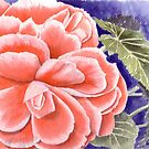 Pink Begonia by Anne Sainz