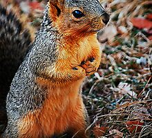 Praying Squirrel by tracielouise