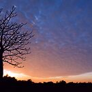 As Night Blankets the Sky by Mieke Boynton