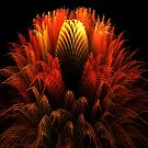 Golden Waratah by vivien styles