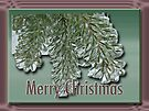 Merry Christmas Arborvitae by MotherNature