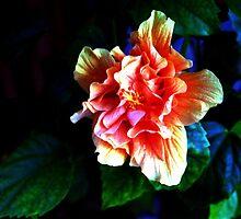Wild Hibiscus by Glenn Cecero
