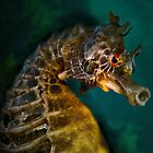 Pot Belly Seahorse by Peter Shearer