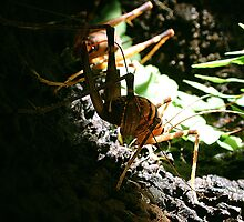 New Zealand Cave Weta 02 by Peter Shearer