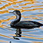 Black Shag by Peter Shearer