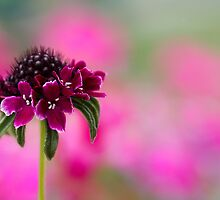 In the pink by Mandy Disher