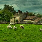 Sheep May Safely Graze by John Hare