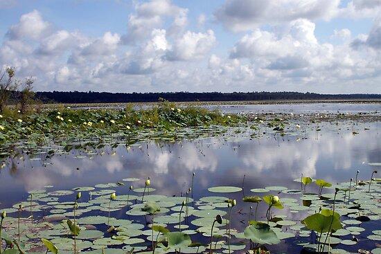 Lake Jackson by RebeccaBlackman