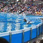 Baby Orca Swimming Alongside Mom-Sea World Orlando by lissie27