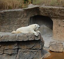 Sunbathing-Denver Zoo, CO by lissie27