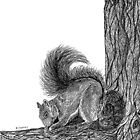 First drawing of a Squirrel in Pen and Ink by BrendaForsey