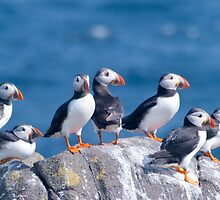 Puffins ~ Isle of May by M.S. Photography & Art