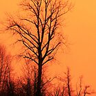 Red Tree Orange Sky by Bassbro